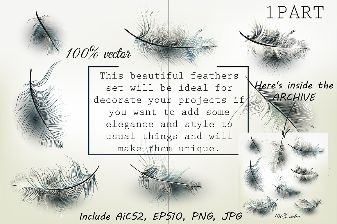 Set of vector realistic feathers