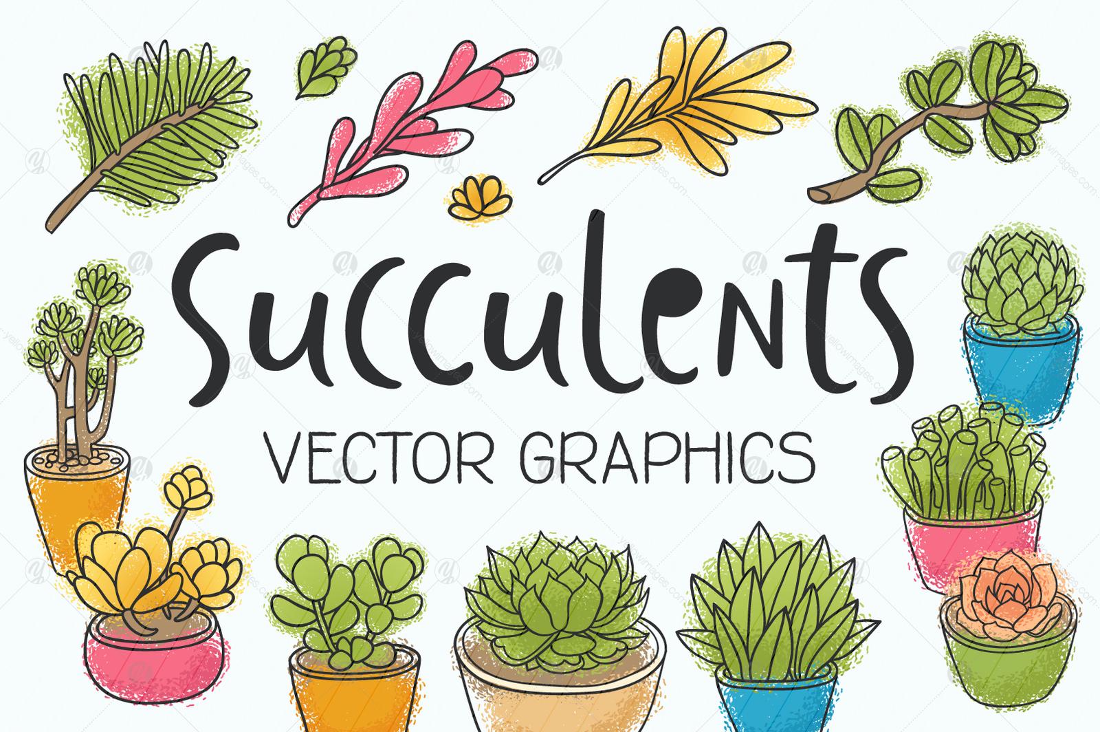 Succulents, 14 vector illustrations