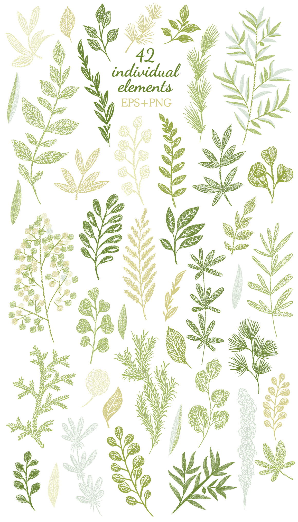 Vector Leaves Branches, Herbs Fresh Doodle collection