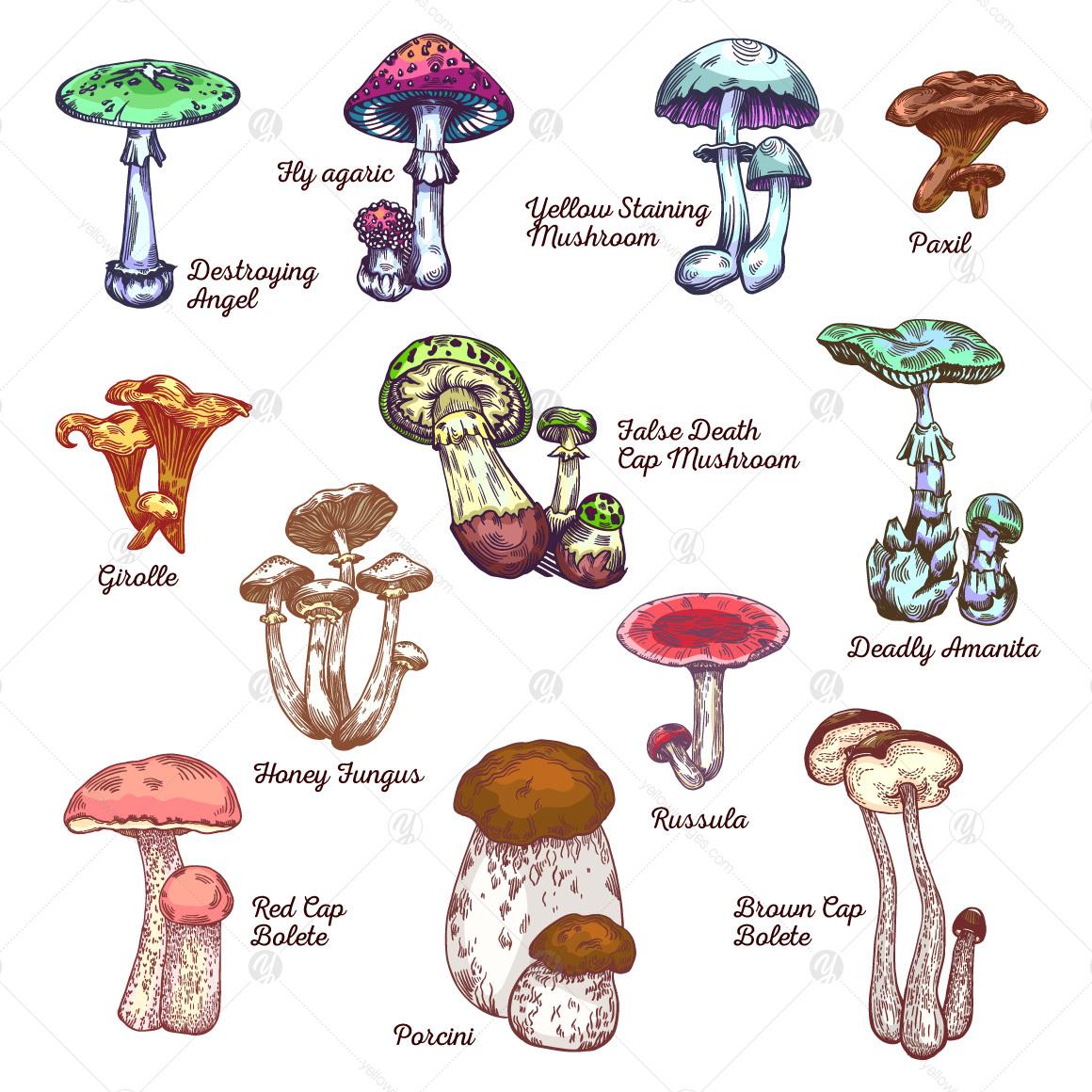 Big mushroom set