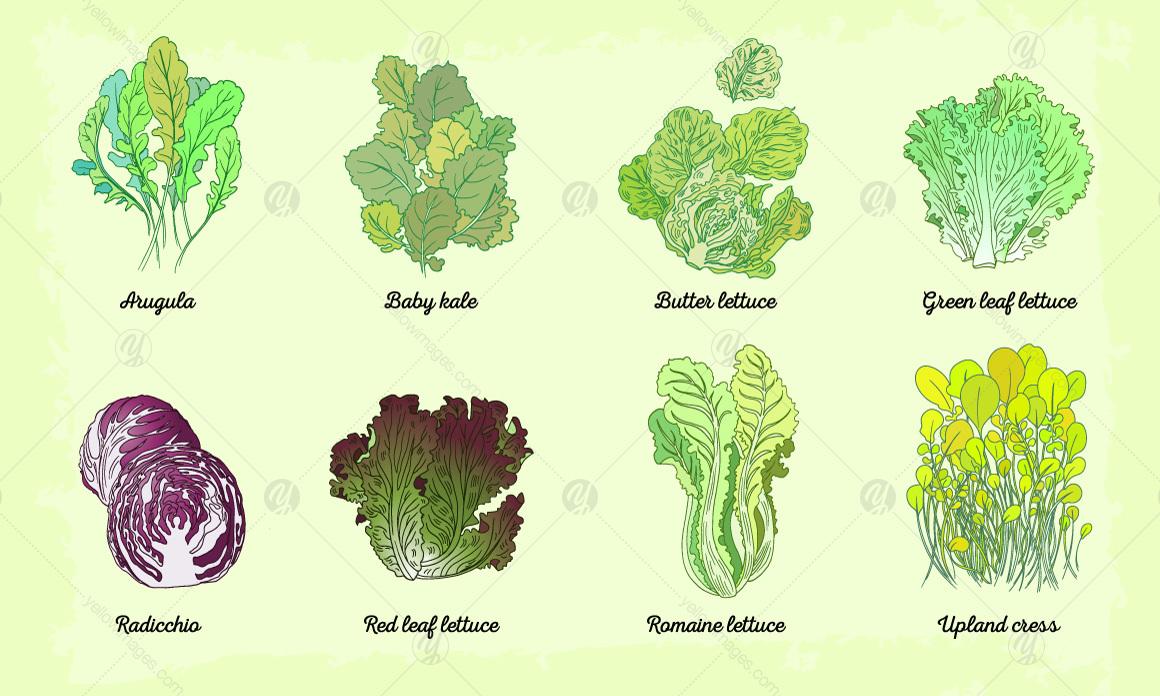 Lettuce watercolor letter set