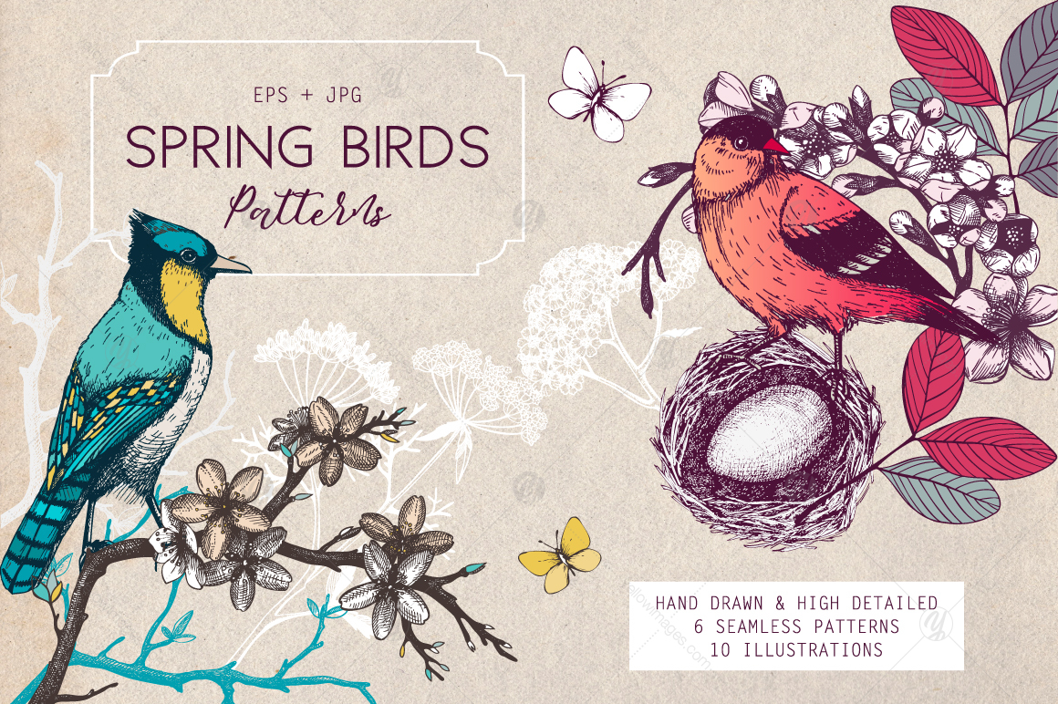 Spring Birds Patterns Collection