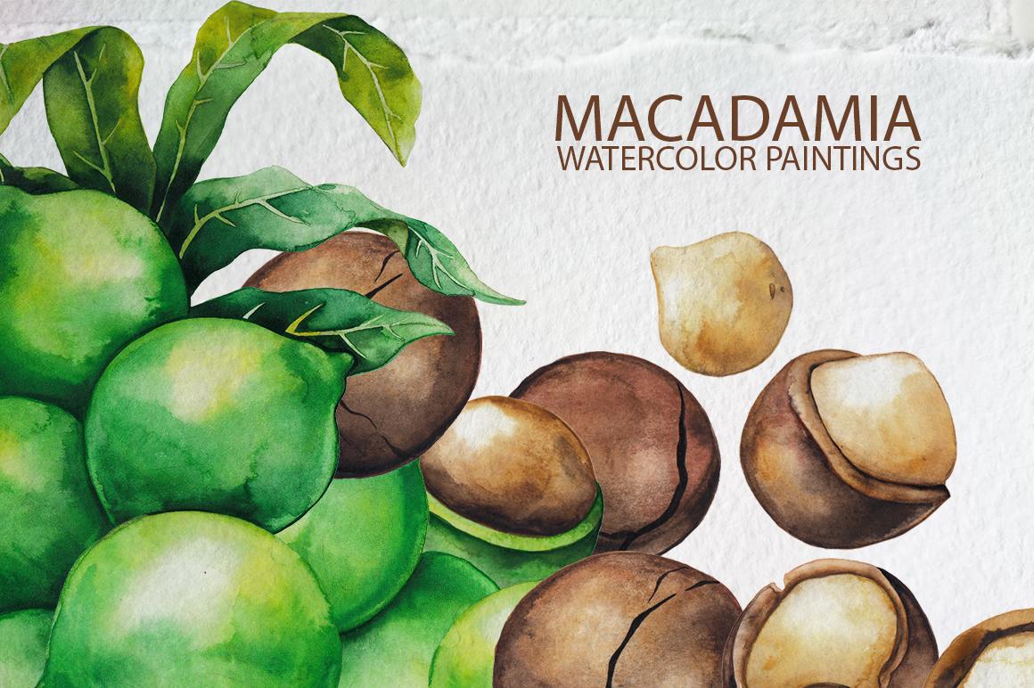 Watercolor Macadamia collection