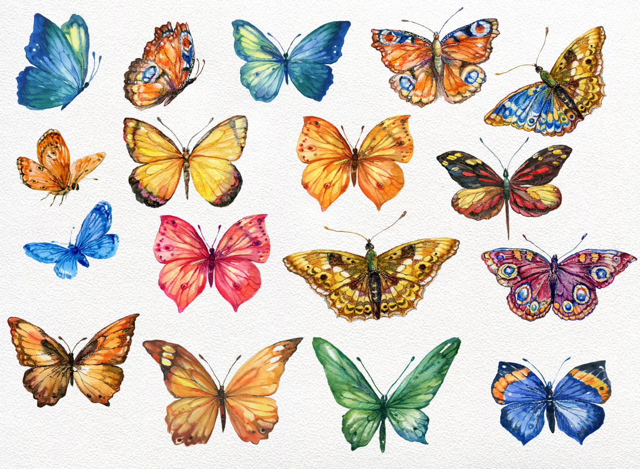 Butterfly collection watercolor