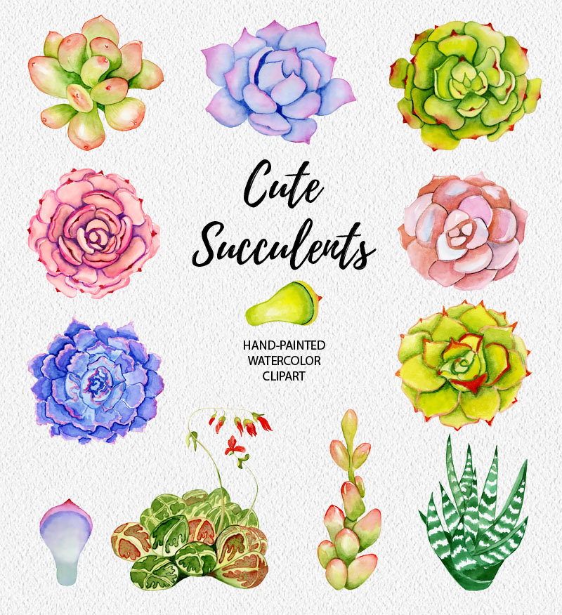 Succulents watercolor clipart