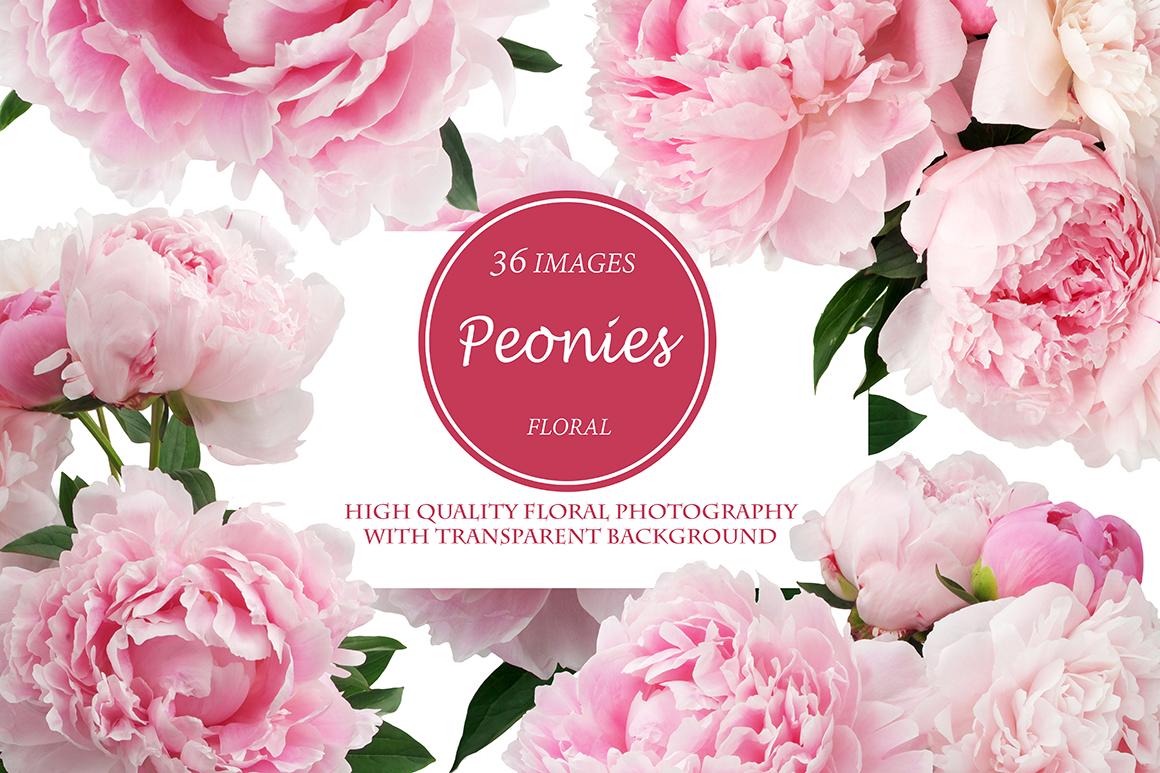 Beautiful Peonies 36 PNG Photos