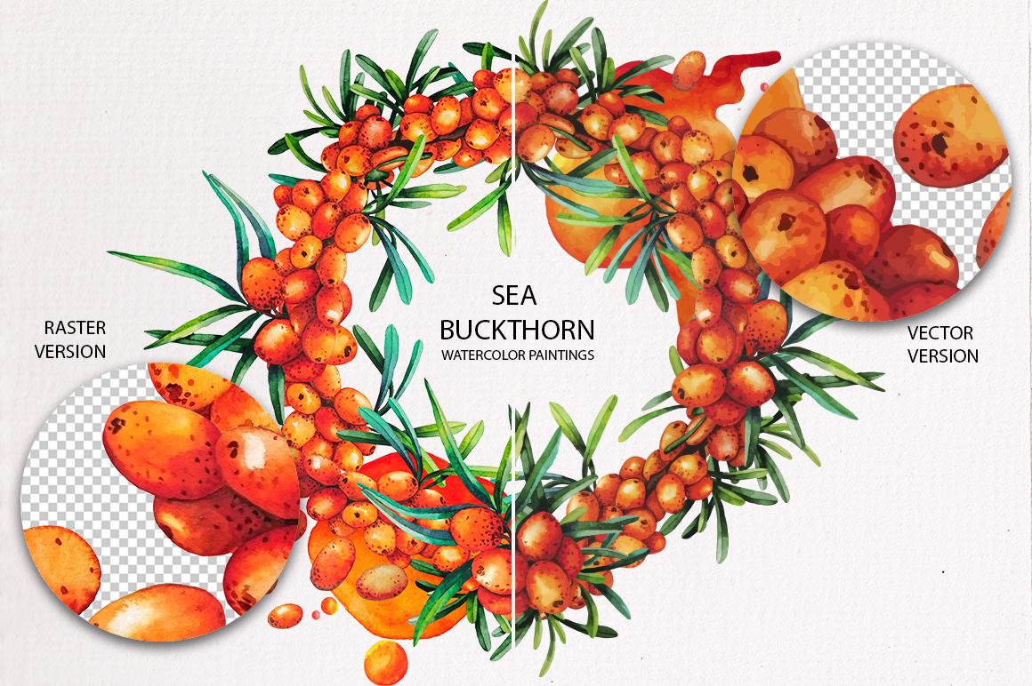 Watercolor Sea Buckthorn