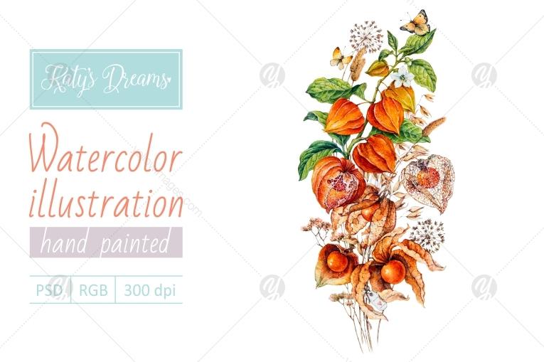 Watercolor physalis