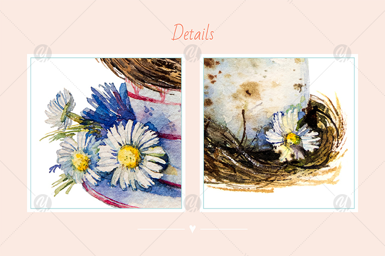 Watercolor set_Chamomiles and nest