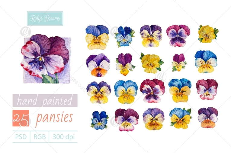 Watercolor set / Pansies