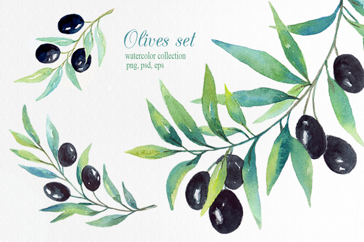 Olive set. Watercolor сollection