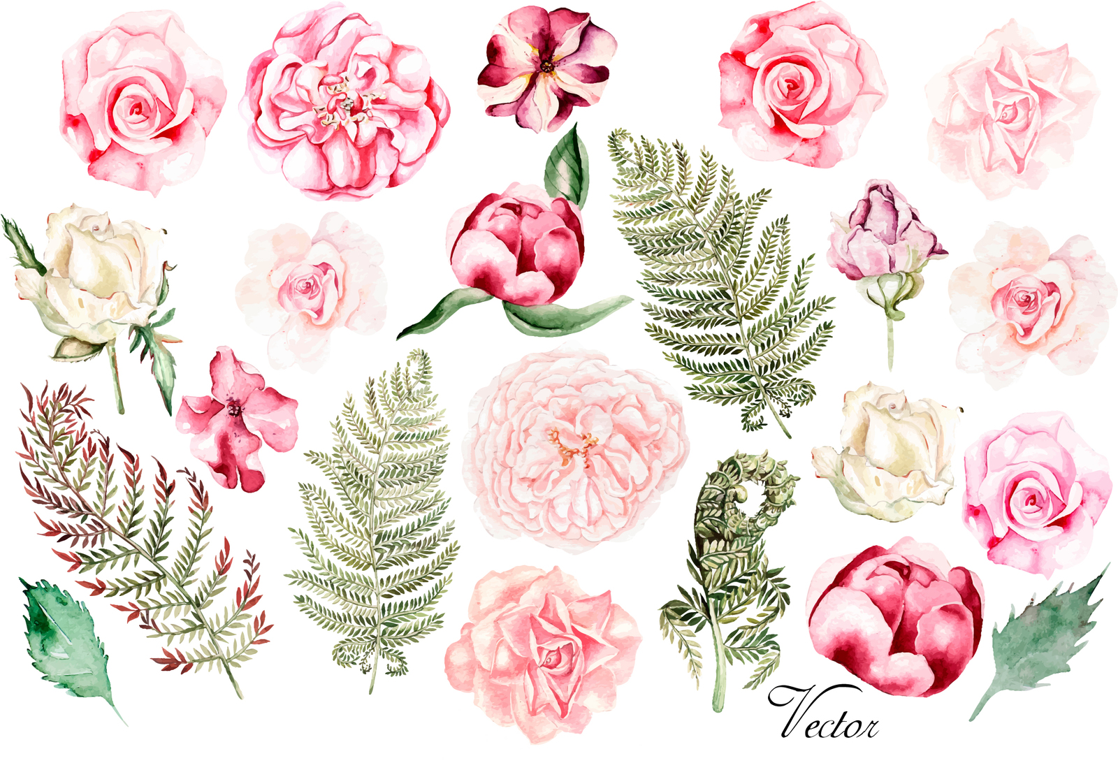 Hand Drawn Watercolor Flowers 23 Png & Vector