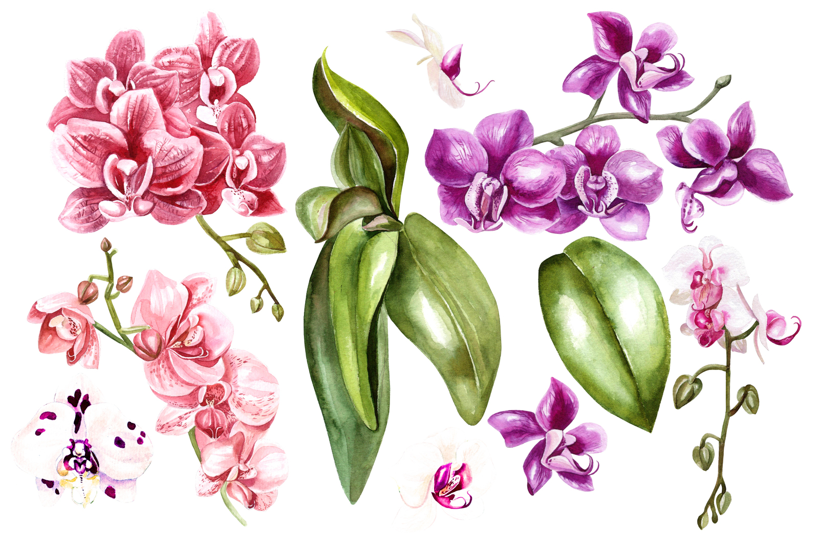 Hand Drawn Watercolor Orchids