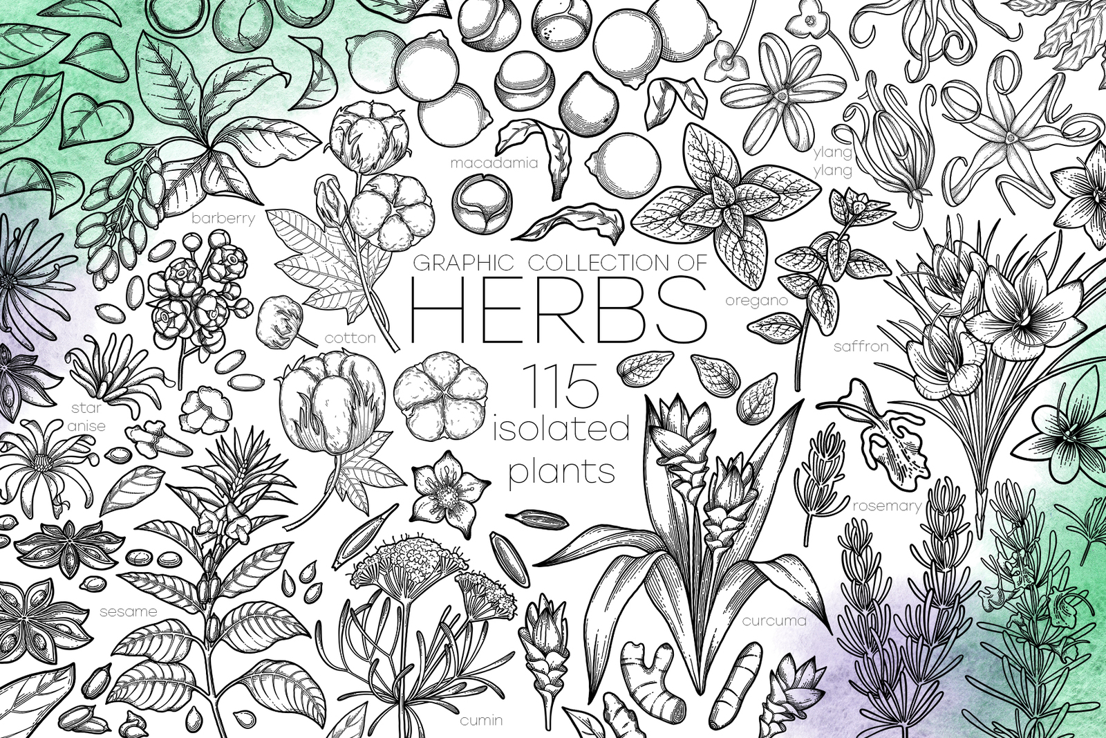 Graphic Herbs