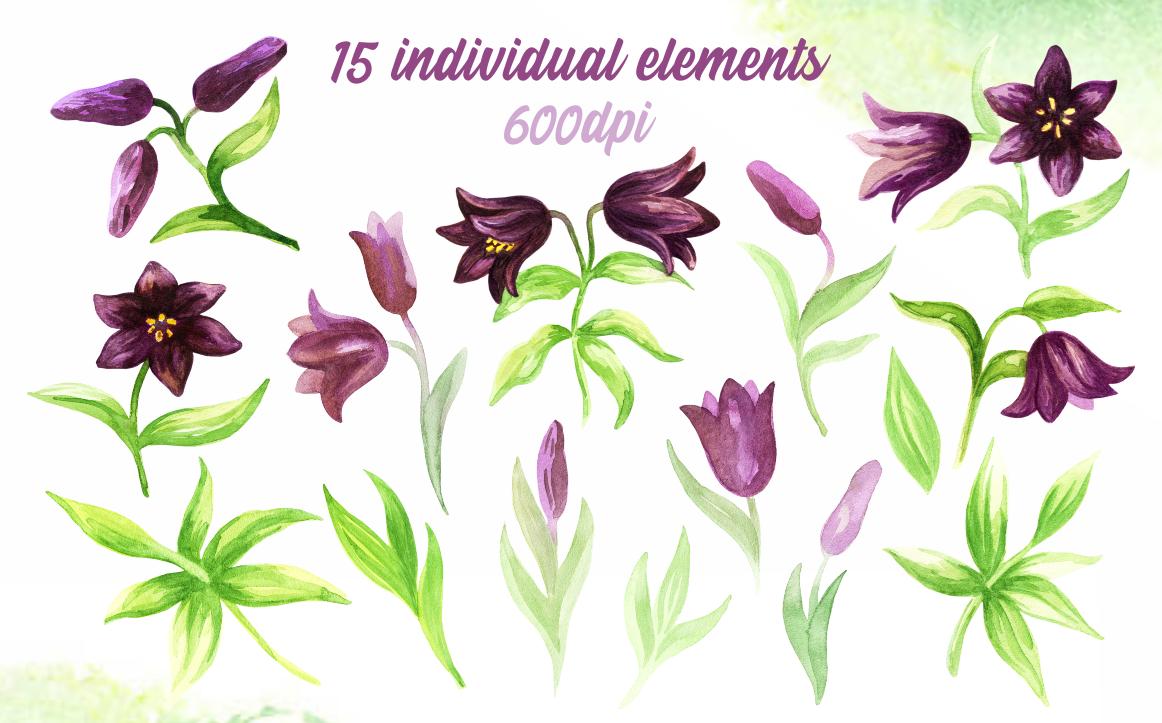 Wild flowers. Watercolor set.