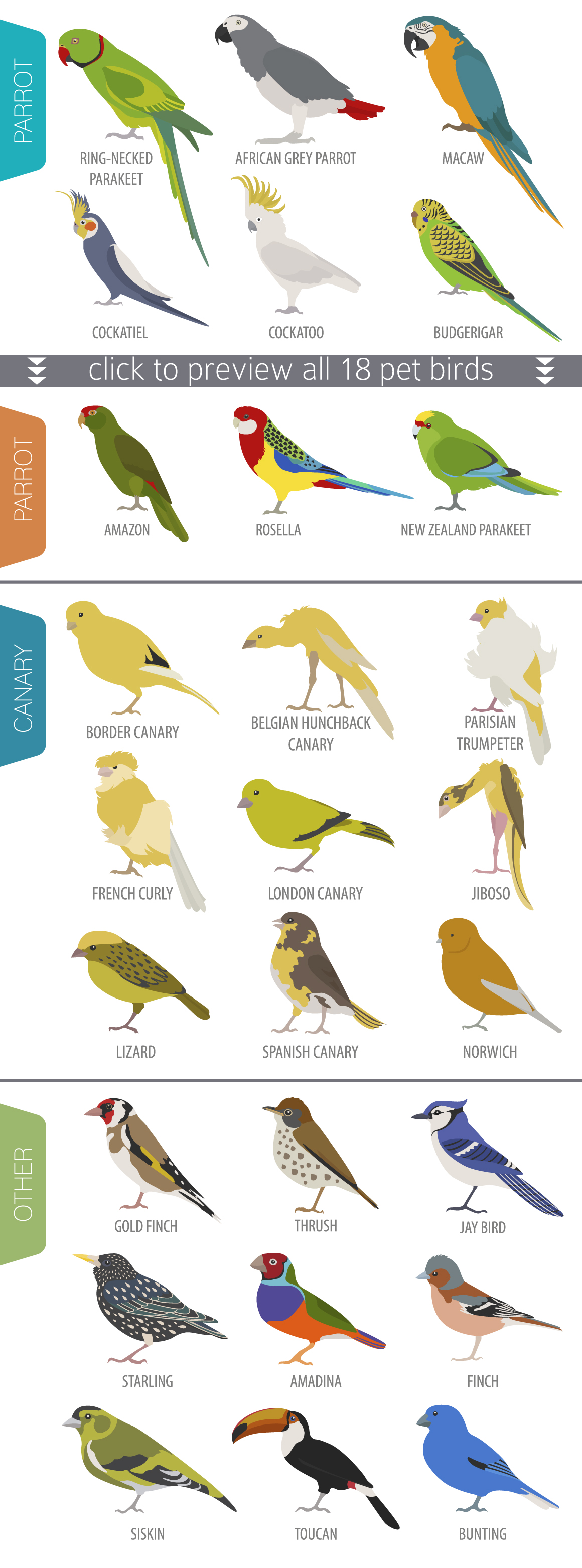Pet Birds illustrations set