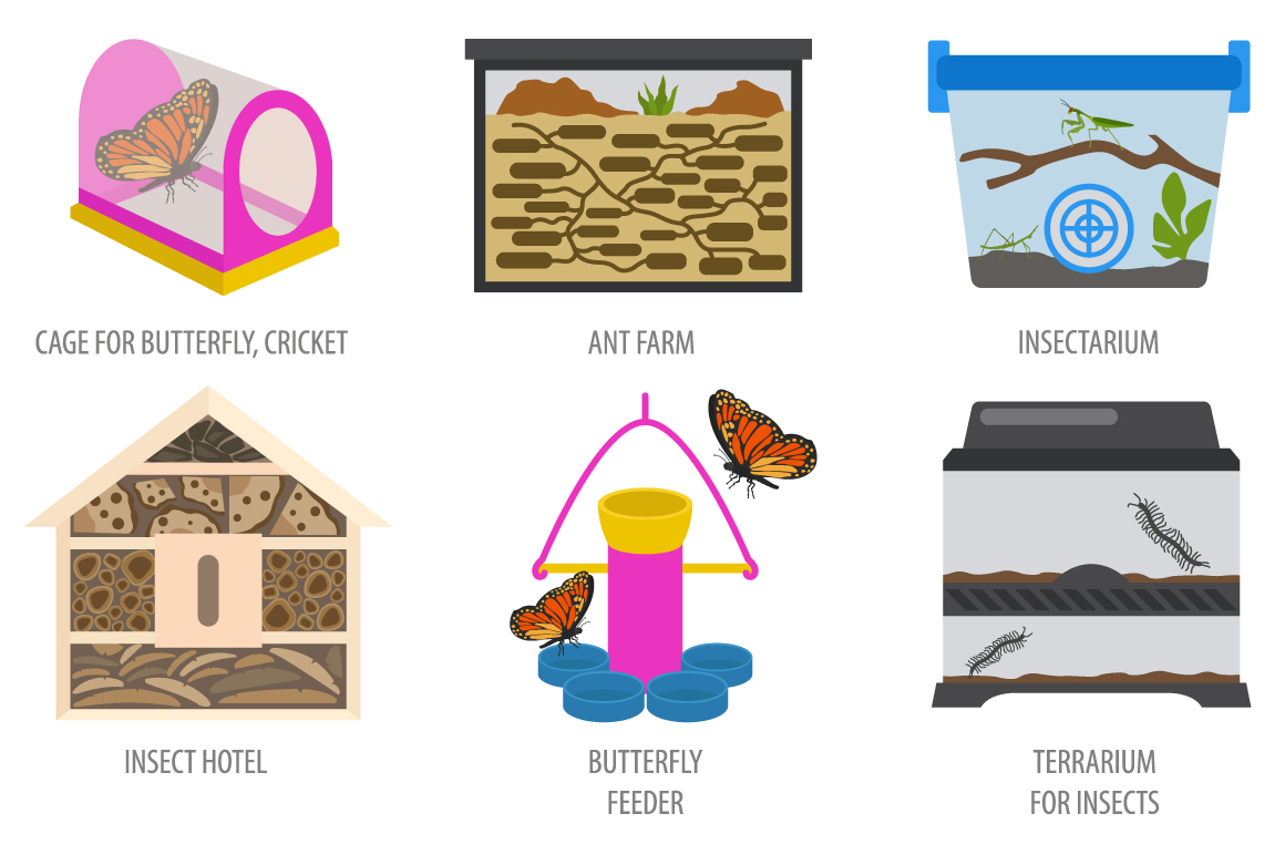 Pet Insects illustrations set