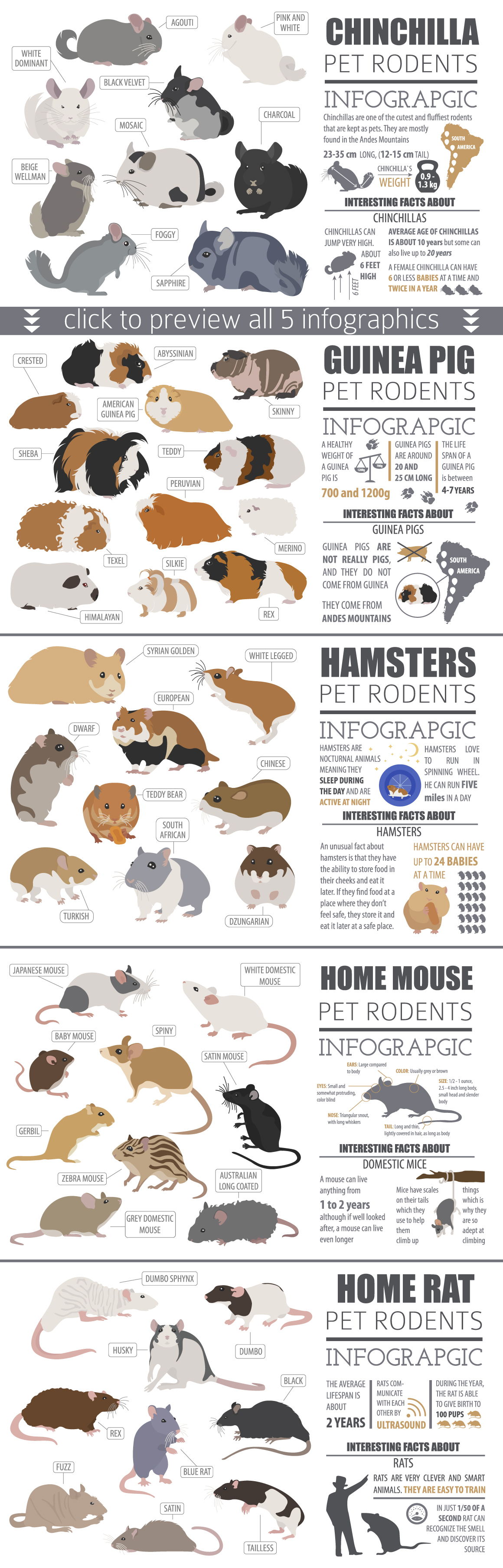Pet Rodents illustrations set