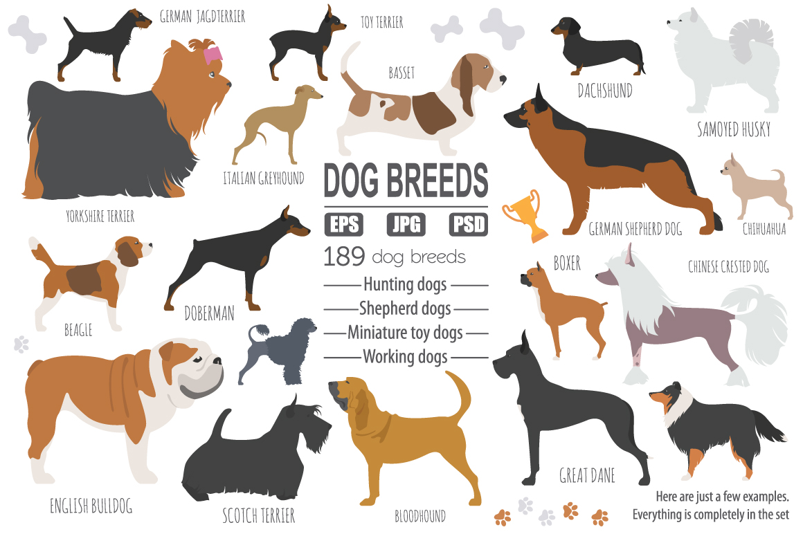 All world DOG BREEDS in one set