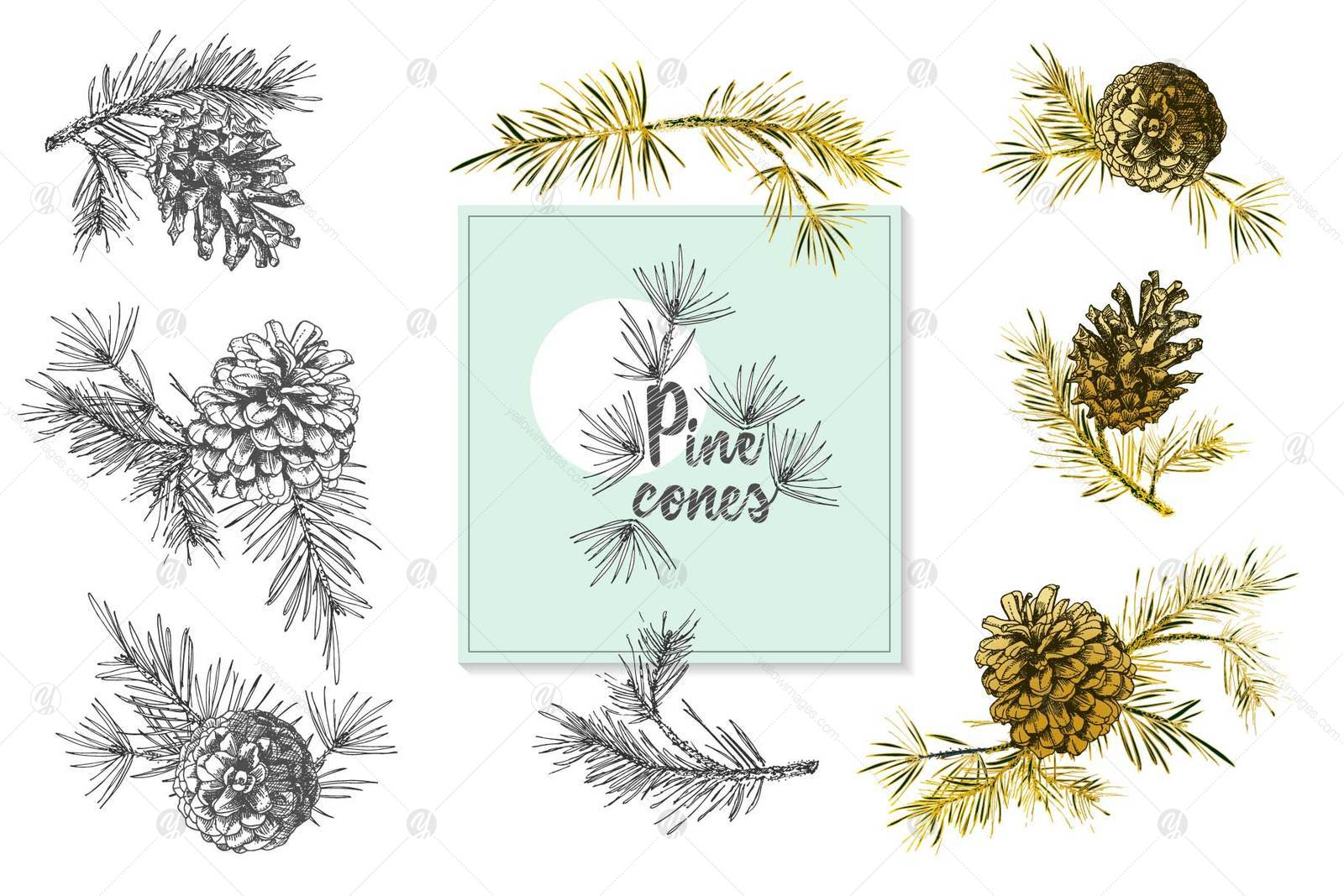 Hand drawn sketch fir with pinecones
