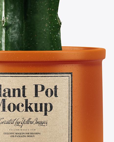 Cactus in Ceramic Pot Mockup