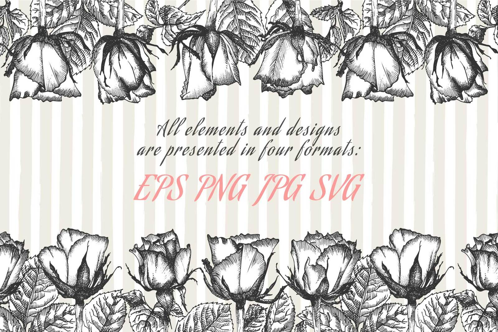 Hand drawn sketch Roses, Vector botanical illustrations