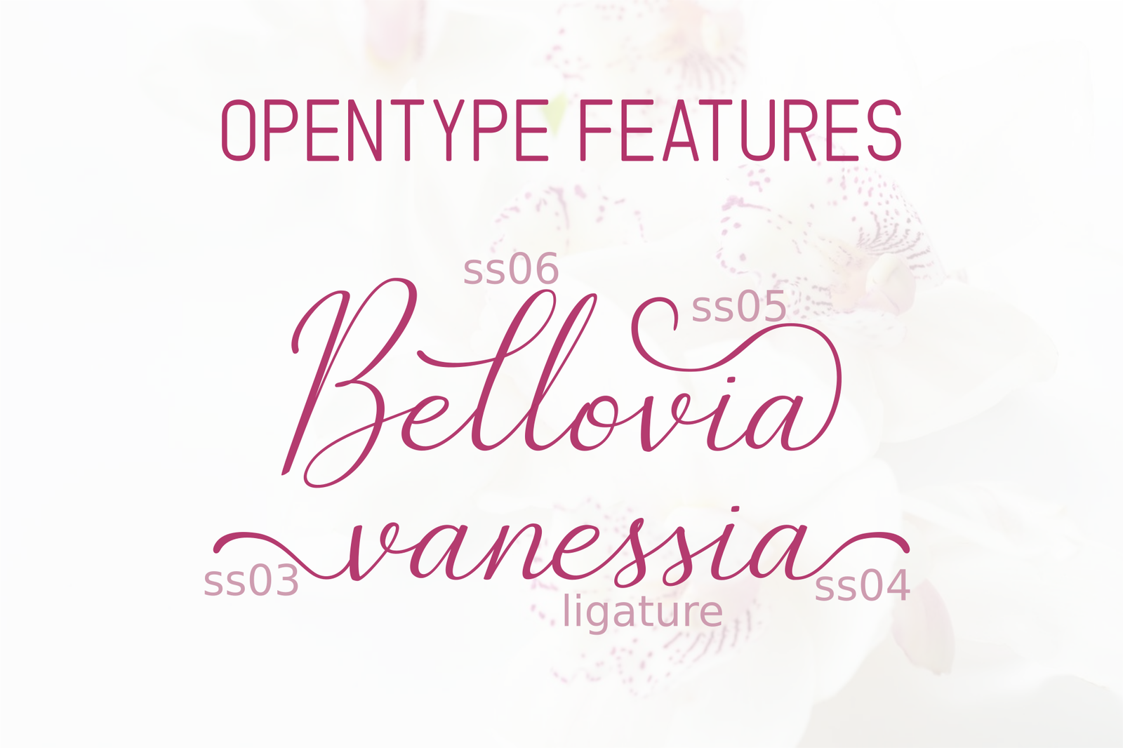 The Bellovia - Font Duo