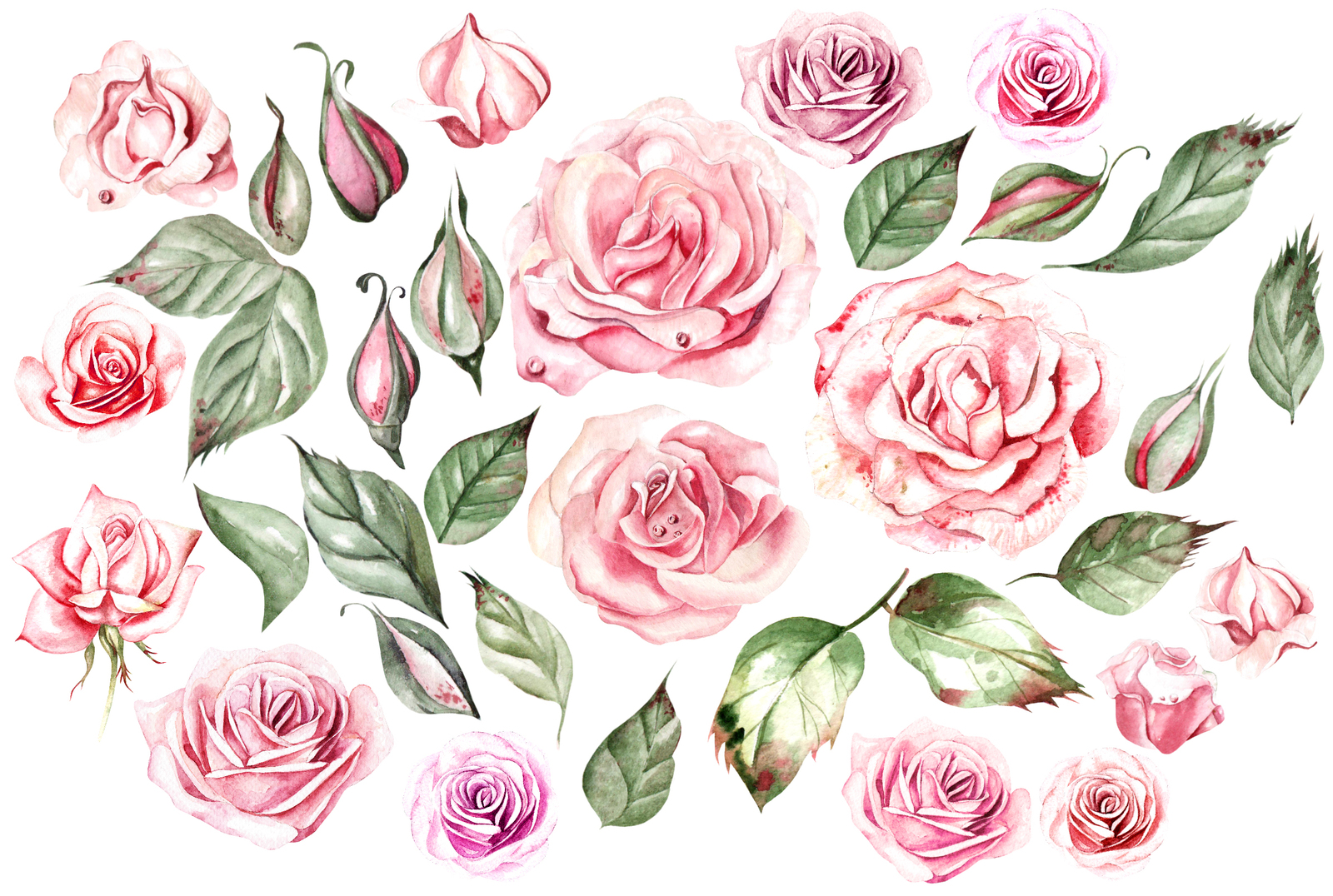 Watercolor ROSES & COTTON