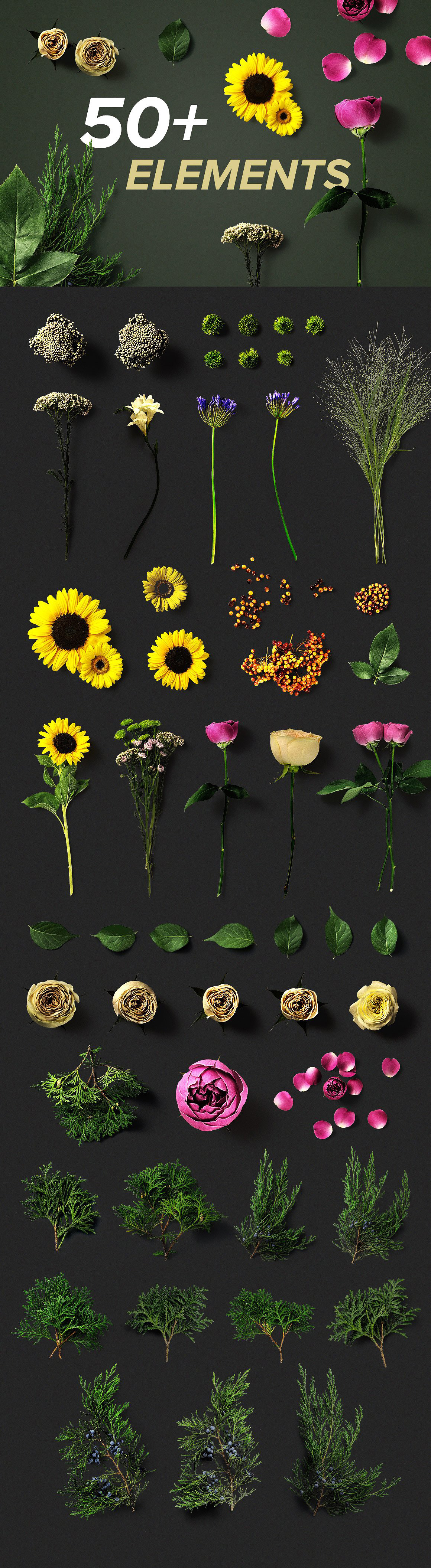 Flower Boom Graphic Pack