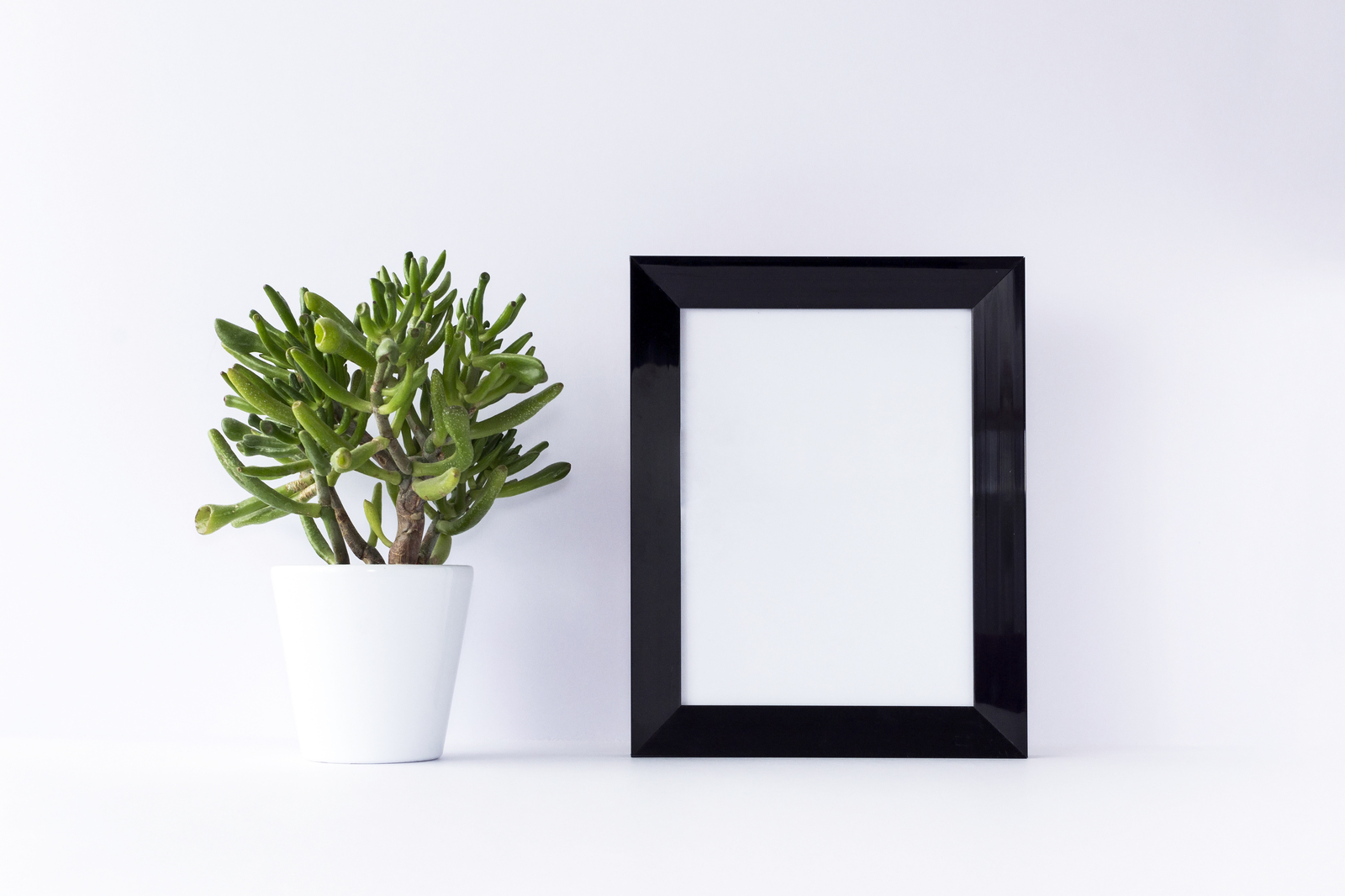 Black Frame Mockup with Cactus Flower